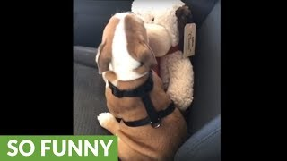 Puppy appears to be smooching his stuffed animal