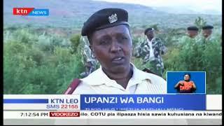 Mtu mmoja amenaswa na polisi kwa madai ya kupanda bangi Limuru