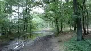 ww2 vw kubelwagen in forest of Market garden, off road
