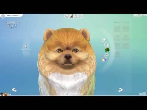 Sims 4 Кошки и собаки! Редактор создания питомца