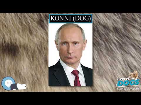 konni-dog