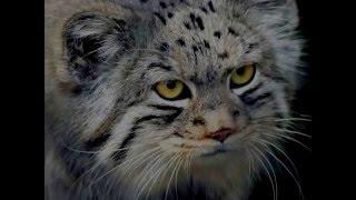Топ 5 самых красивых кошек в мире