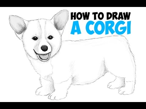 How to Draw a Corgi Step by Step Easy Drawing a Corgi Puppy Dog