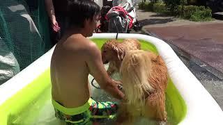犬をプールに入れる屋さん2018版