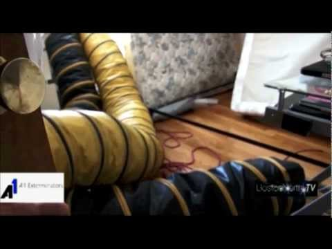 best-way-to-kill-bedbugs:-bed-bug-extermination-by-a1-exterminators