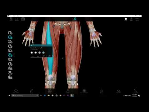Quadriceps and Hip Flexors Anatomy - YouTube