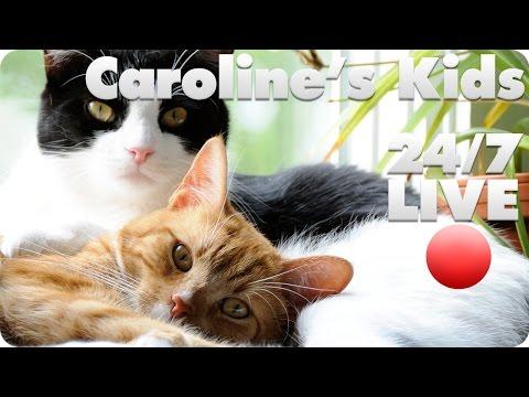 Thumbnail for Cat Video Caroline's Kids Rescue Live Cam