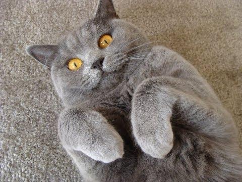 ОЧЕНЬ КЛАССНОЕ ЗРЕЛИЩЕ! Купил коту массажер!!! коты и их хозяева! Приколы 2019