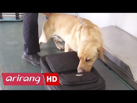InfoScope _ Artificial Dog Nose Improves Air Particle Detection