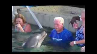Dolphin Spits At Man, Man Spits Back, The Game Is On
