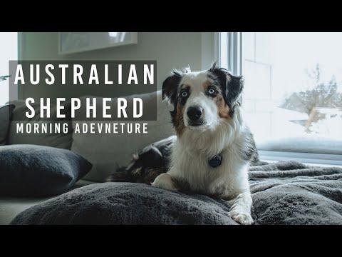 Australian Shepherd - Our Morning Adventure!