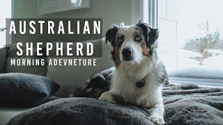 Australian Shepherd  Our Morning Adventure!