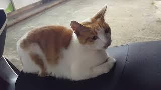 식빵굽는고양이 1탄  편의점앞고양이  치즈고양이 오토바…