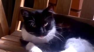 Забавные животные. Красавица. Красивая кошка умывается. Beautiful cat. Home animal. Funny video.