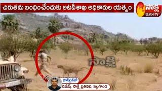 Tiger Wandering in Nalgonda District   Latest update   Sakshi TV