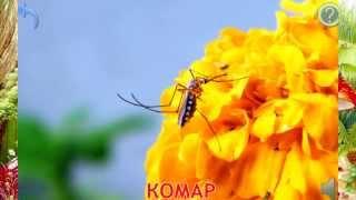 Мультфильм Презентация насекомые и их звуки