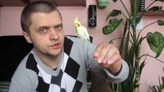 Попугаи Корелла  Как отличить самца от самки и чем кормить СОВЕТЫ