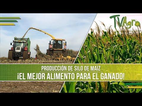 Producción de Silo de Maíz: El Mejor Alimento para el Ganado - TvAgro por Juan Gonzalo Angel