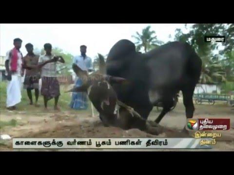 Tamil Nadu celebrates jallikattu's return, bulls get ready