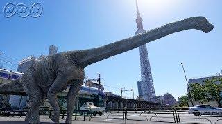【恐竜CG】日本最大の恐竜『丹波竜』とは!?【NHK恐竜超世界2019】Japanese dinosaurs CG