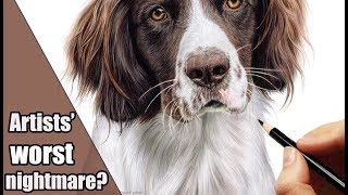 How to draw WHITE Fur on WHITE PAPER in colored pencil | Not as scary as it seems;)