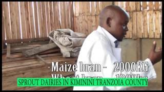 Sprout Dairies IN KIMININI tranzoia county-farmers check kts tv kenya