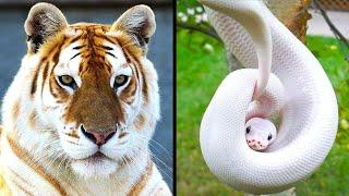 Animales Más Raros De Todo El Mundo