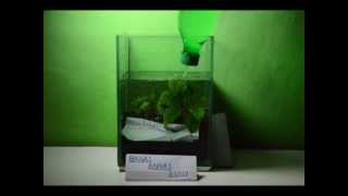 Repeat youtube video Tutorial Membuat Aquascape