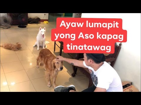 Asong ayaw lumapit, how to teach a dog to come when called