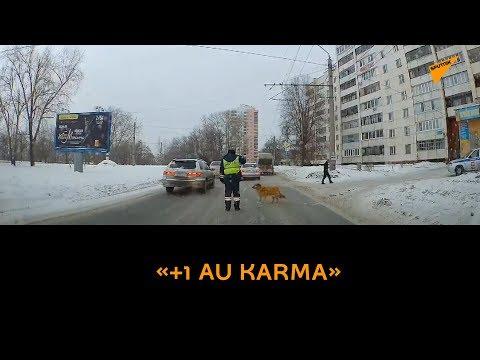 «+1 au karma»: un policier de la route aide un chien à traverser une rue