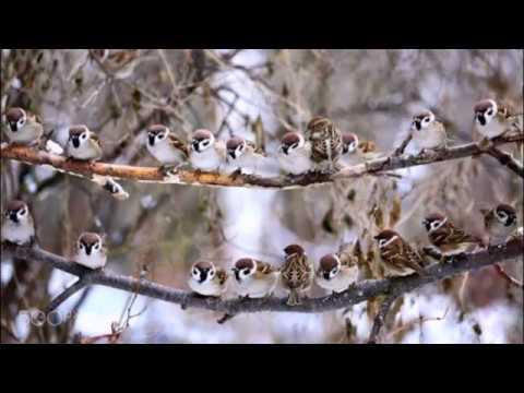 Смотреть видео В преддверии весны, сл  В  Шентала, муз  и исп  Вл  Блинов, худ  С  Влади