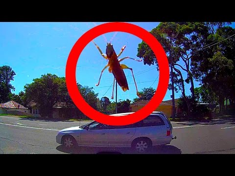 Giant SCARY Bug Attacks Car Big Spider Caught On Dashcam Video