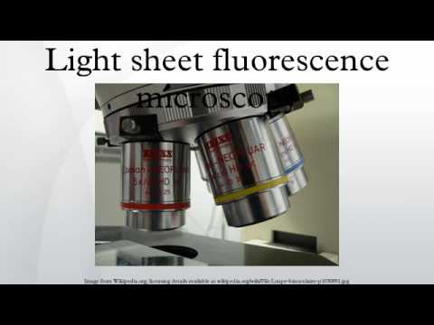 Light sheet fluorescence microscopy