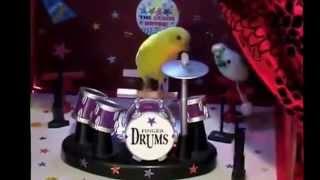 Лучшие видео приколы Приколы с попугаями