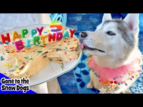 how-to-make-a-dog-birthday-cake-|-birthday-cake-for-dogs-|-diy-dog-treats-recipe-98