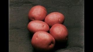 Сорта картофеля(, 2011-12-21T06:00:01.000Z)