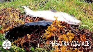 КАК ЖЕ ХОРОШО ЛОВИТЬ ВОЗЛЕ ДОМА КОГДА РЫБА ЛОВИТСЯ Рыбалка в Норвегии с берега Норвегия Рыбалка