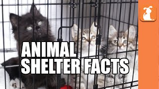 7 Crazy Facts About Animal Shelters