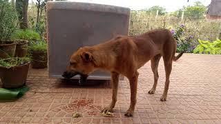 நாய் எலும்பு கடித்தல். Dog biting bone. Funny video.