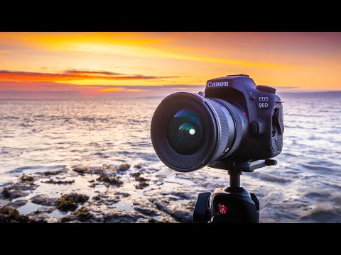 Canon 90D Real World Review | Nature Photography Edition
