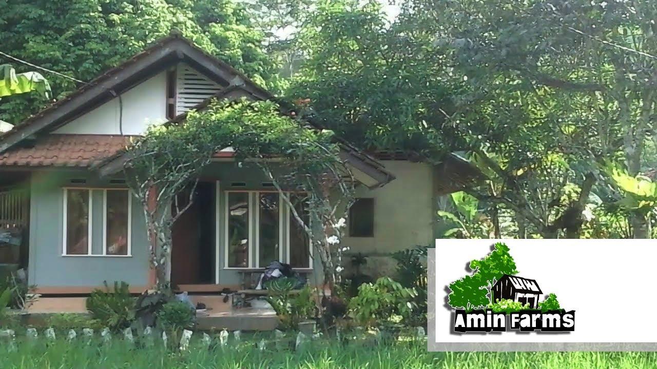 Suasana Pedesaan Yang Asri Youtube Rumah desa yang asri