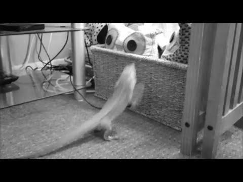 Lizard Parkour Montage(WARNING INSPIRATIONAL)