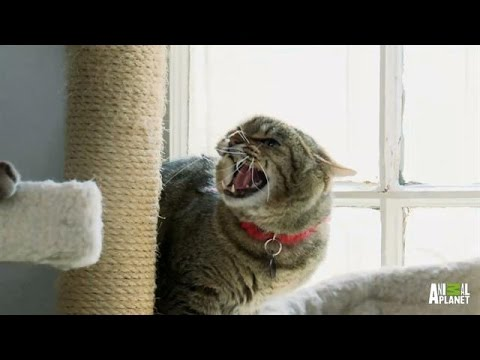 An Insane Asylum for Cats | My Cat From Hell