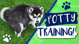 Alaskan Klee Kai: How To Potty Train Your Klee Kai