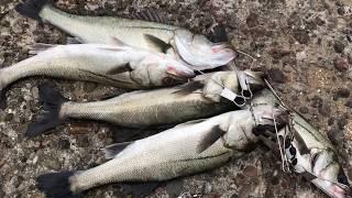 fishingmax 泉大津潮が良い時にバタバタHIT thumbnail