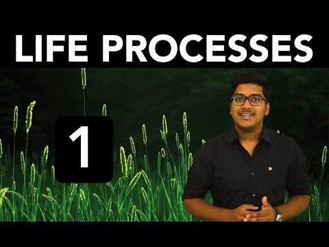 Biology: Life Processes (Part 1)