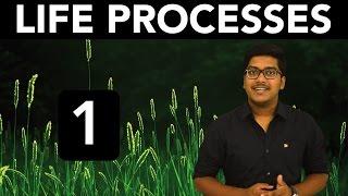 Biology: Life Processes (Part 1)