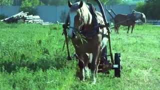 Сенокос на лошадях