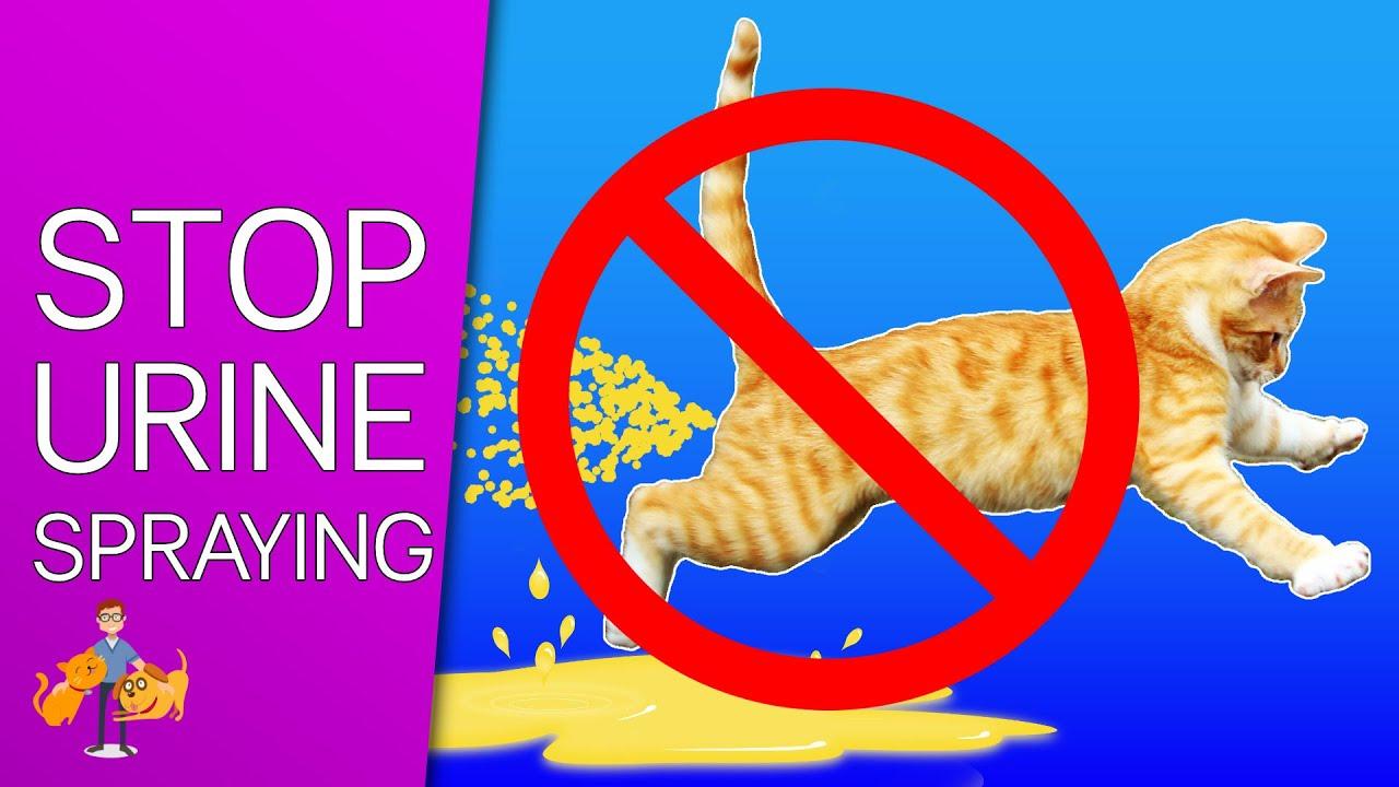 why is my feline small indefinite quantity urine
