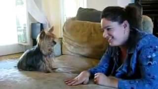My Smart Dog Can Talk! (deaf Sign) Enjoy Watching! 2010